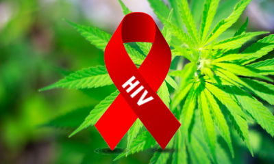 How Cannabis can prevent AIDS