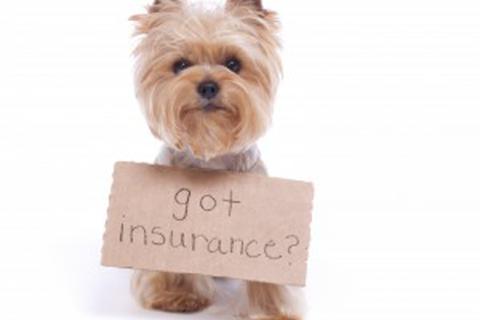 Pet Insurance Options